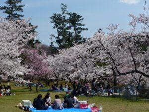 桜宴会_JALAN_140413